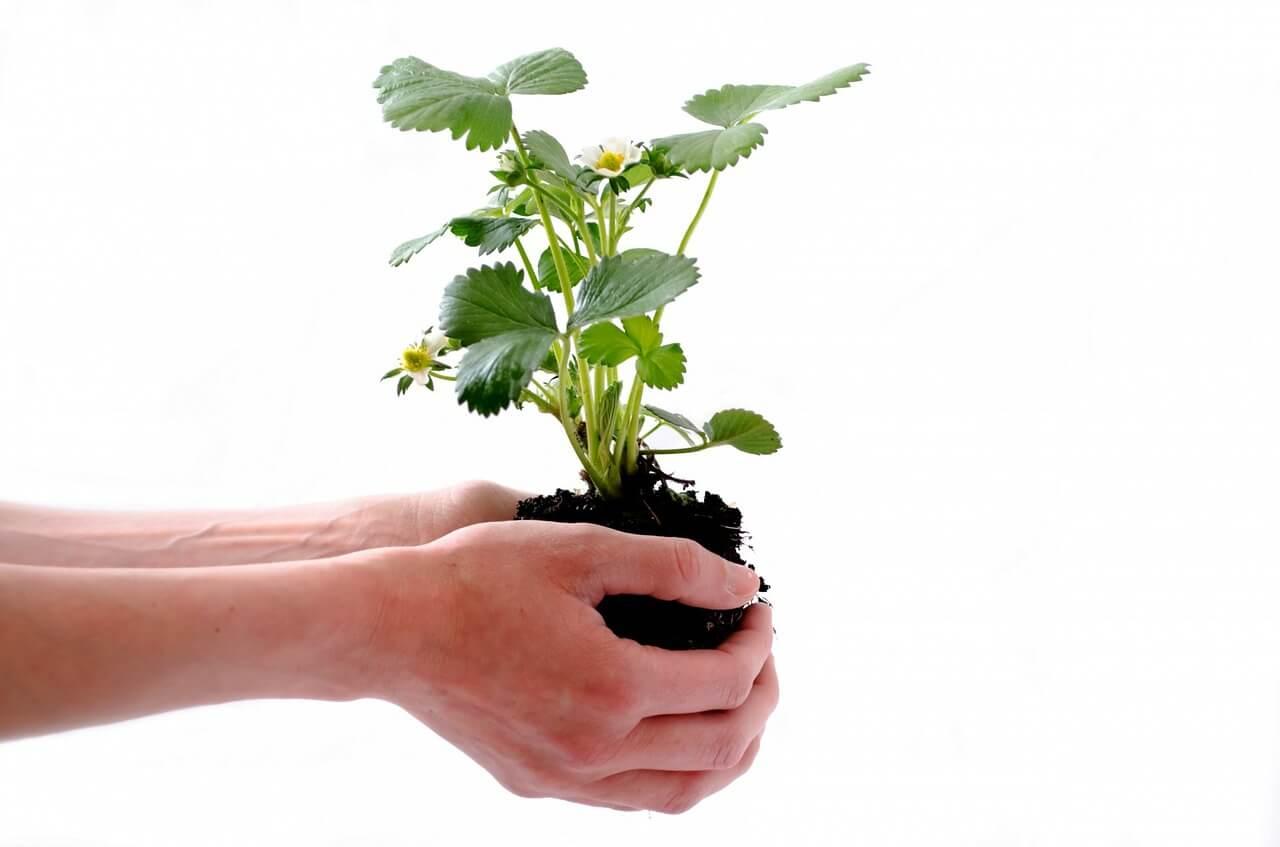 Image représentant l'écologie